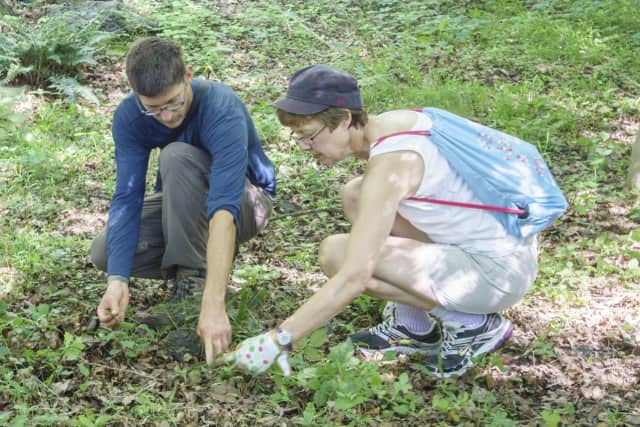 Members of the Westchester Land Trust work on a garden.