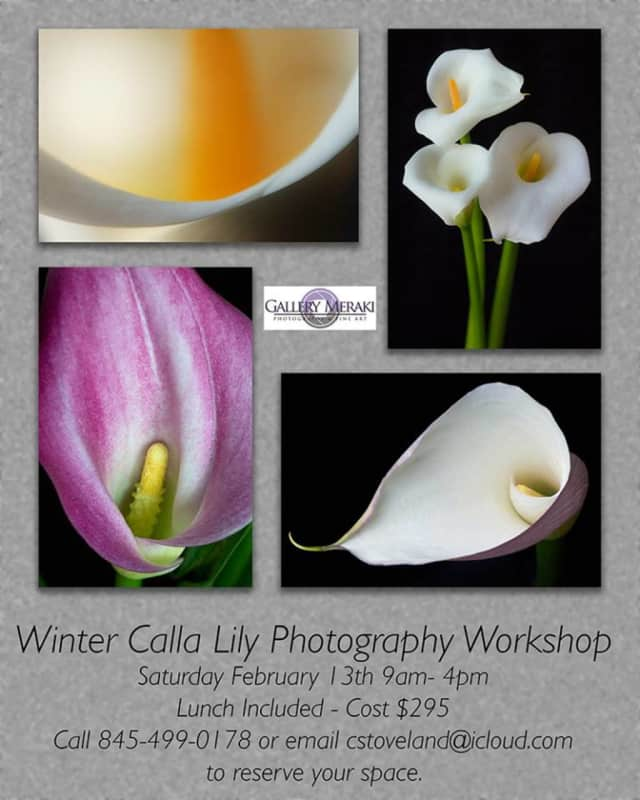 Gallery Meraki will hold a Winter Calla Lily Photography Workshop on Saturday, Feb. 13, from 9 a.m. - 4 p.m.