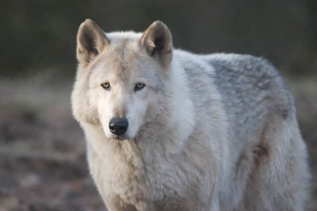 Each session will include outdoor exploration and a chance to meet the center's nature-loving ambassador wolves.