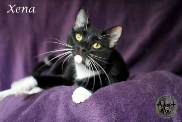 Xena is one of the pets available for adoption at Hi Tor.