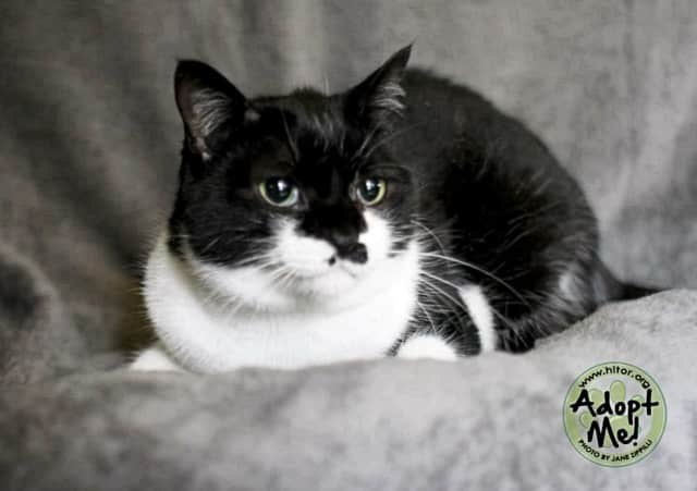 """Queenie will soon have been at the shelter for two years, and she's looking for her """"furever"""" home."""