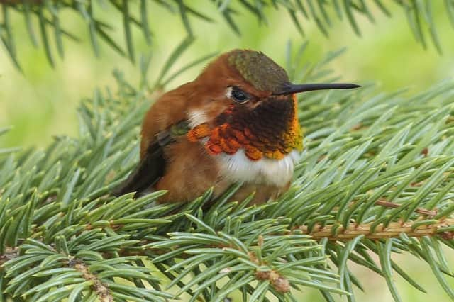 An Allendale group is gathering Jan. 16 at Paramus Park Mall for a bird-watching excursion.
