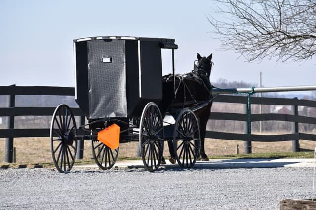 Horse-and-buggy.