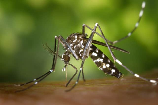 The first human case of West Nile virus in New Jersey was recently reported recently in Monmouth County and two other suspected cases are being investigated, according to in the health department's most recent surveillance report.