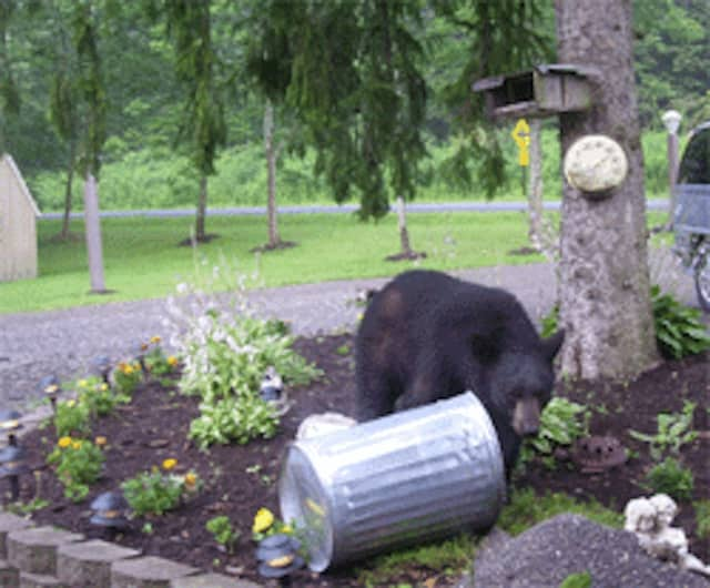 An upstate New York man was injured after encountering a black bear in his garbage can.