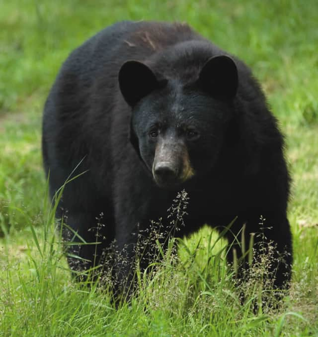 Ramapo Mountain State Forest is closed for the second week in a row following black bear encounters with hikers.