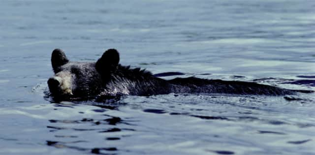 A bear was spotted swimming in the Hudson River Monday.