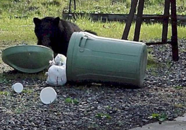 Black bear sightings are on the rise at homes in Ramapo.