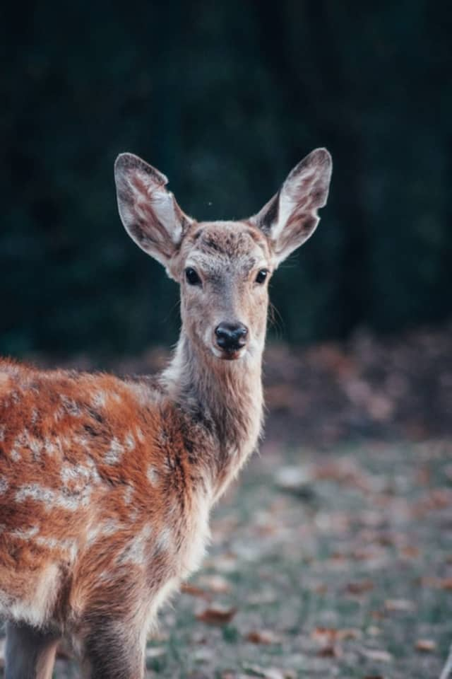 Deer with a fatal brain disease have made their way near the New York border, officials are cautioning.