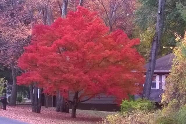 Vibrant fall colors in Bethel