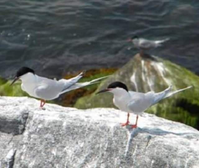 The Bruce Museum kicks off October events Sunday with First Sunday Bird Walk at Greenwich Point Park.