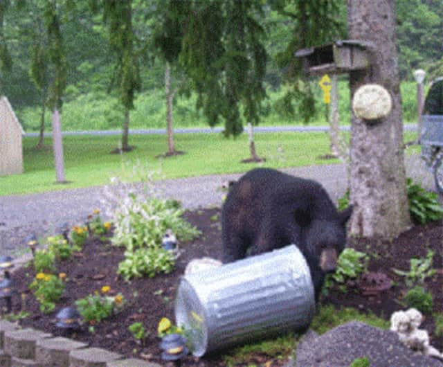Human-bear conflicts can be avoided by doing simple things such as taking bird feeders in and securing garbage cans in garages or sheds.
