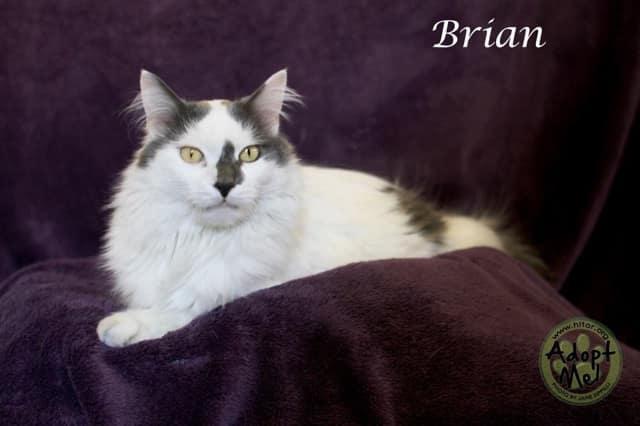Brian is Hi Tor's Pet of the Week.