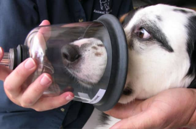 Pets are at special risk during home fires because they are unable to leave the house without help, Canine Company said.