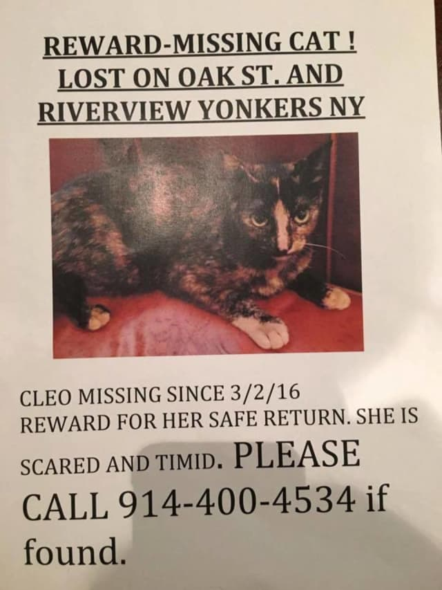 This cat is missing in Yonkers.
