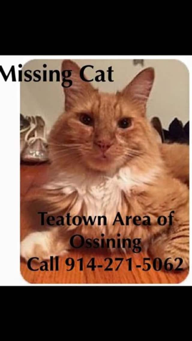 """KC"" last seen in the Teatown area of Ossining is missing."