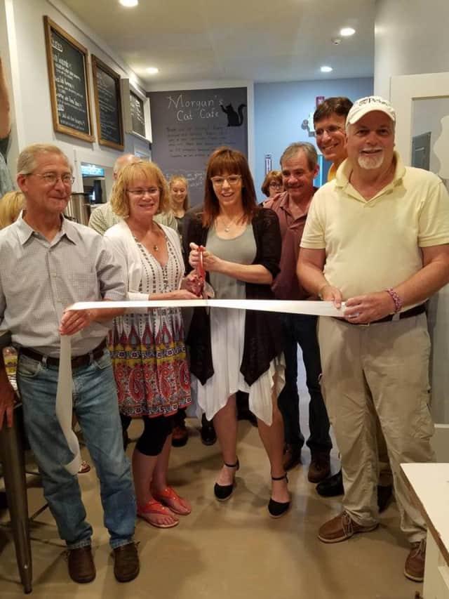 Morgan's Cat Cafe in Red Hook is set to open in Red Hook, N.Y.
