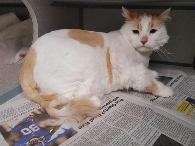 Is this cat found in Greenburgh yours?