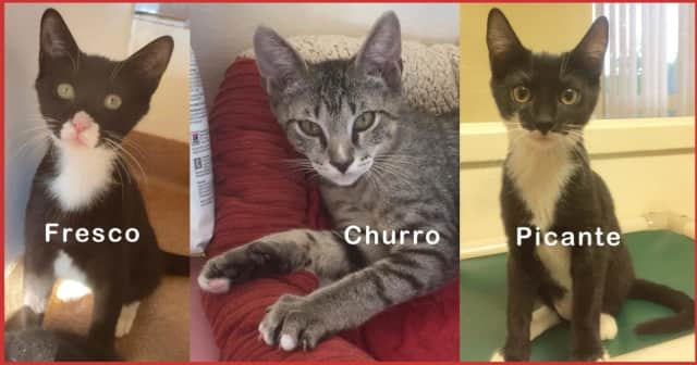 Fresco, Churro and Picante are looking for a new home.