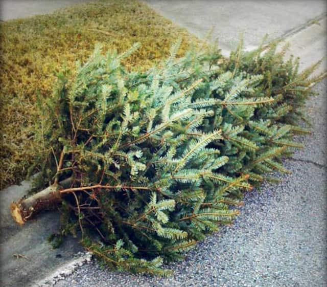 Shelton's Christmas tree pickup will take place from Jan. 11-15.