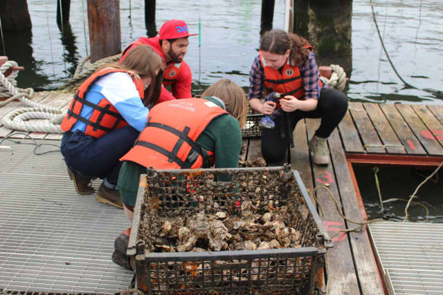 Pace University is partnering with New York City students to help restore the once-vibrant New York Harbor.