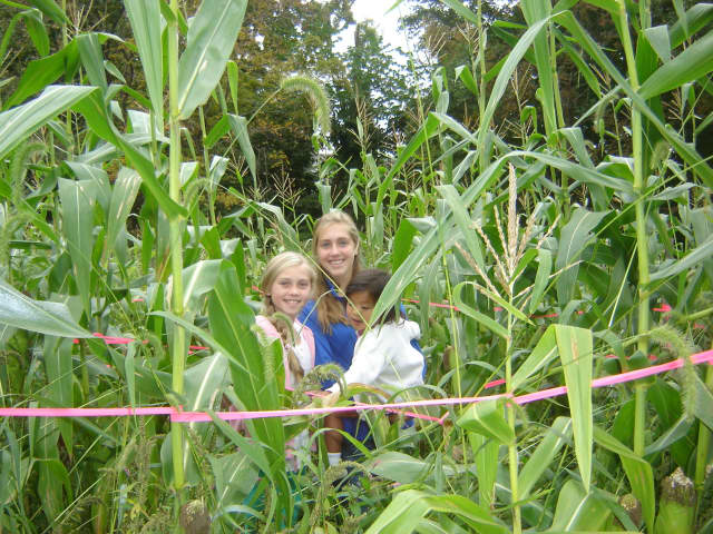 The Lewisboro Library Book Fair features much more than books. A corn maze is among activities at the event, Saturday, Sept. 24 at Onatru Farm Town Park.