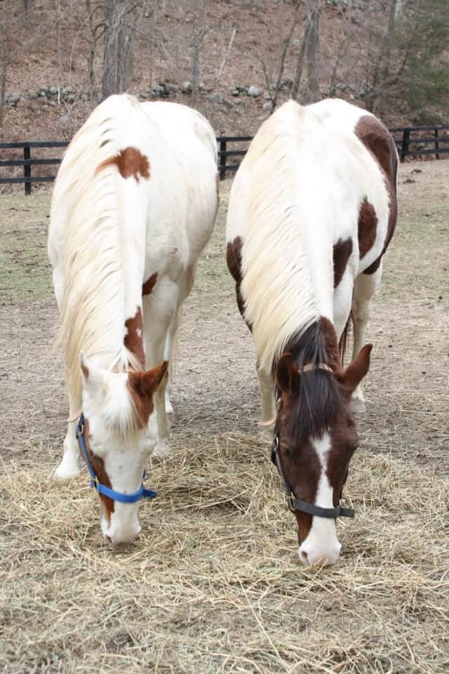 Courtyard Farm will hold 13 Hands Equine Rescue's first fundraiser on June 5.