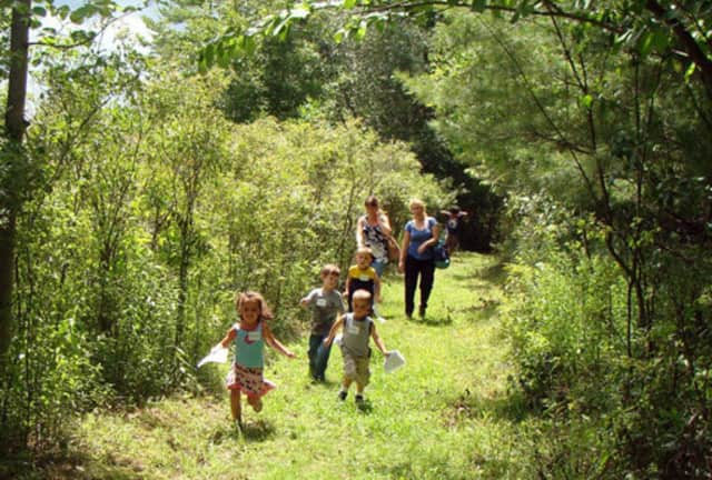 Come enjoy a fall nature walk in the Otter Creek Preserve in Rye Neck.