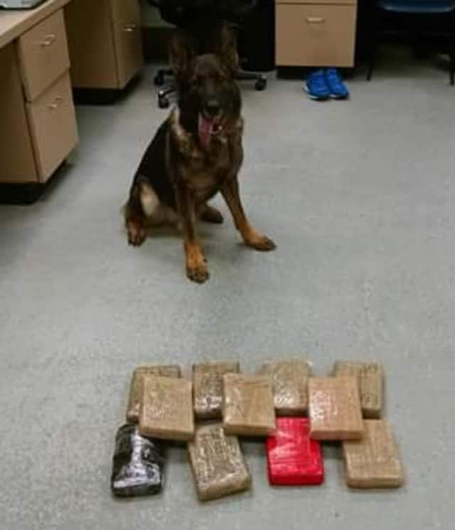 K9 Cyrus, a beloved member of the Trumbull Police Department, passed away unexpectedly earlier this month leaving Officer RJ Carlson without a canine partner. Cyrus is shown with a cache of drugs he helped sniff out recently.