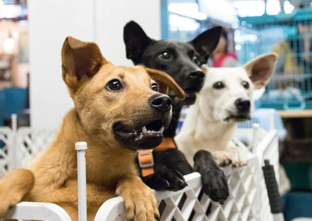 Local startup HowIMetMyDog finds the perfect forever homes for shelter dogs