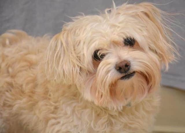 Dog licenses must be renewed in Franklin Lakes by March 31.