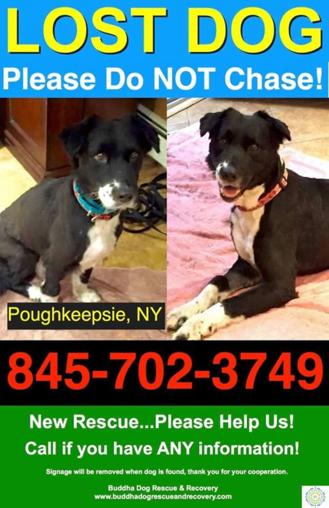 A new rescue has gone missing in Poughkeepsie.