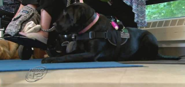 East Coast Assistance Dogs graduated a class of service dogs on Monday.