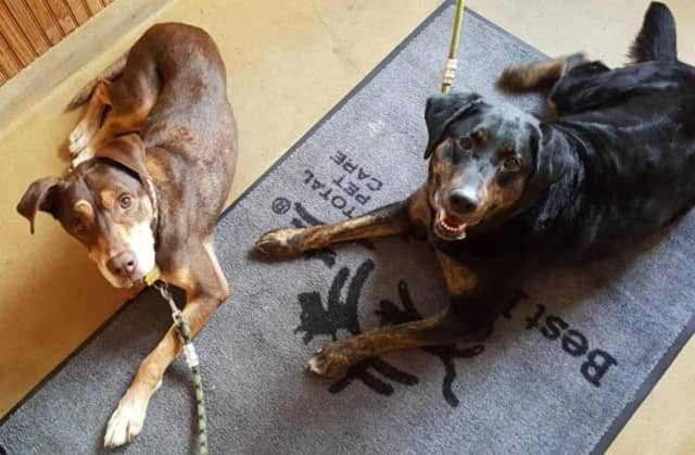 Danny Boy, left, and Gail recently lost their owner.