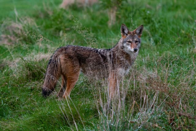 Police are warning residents that two coyotes have been seen in Fairfield County.