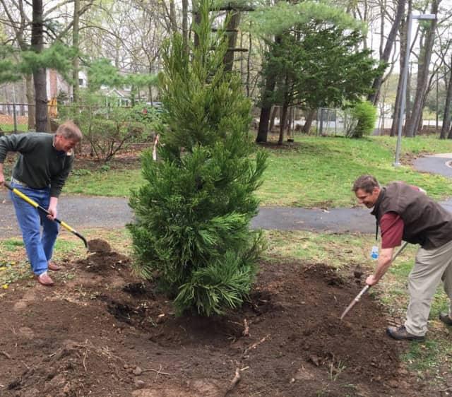 Eversource employees plant a tree at Tokeneke School in Darien.