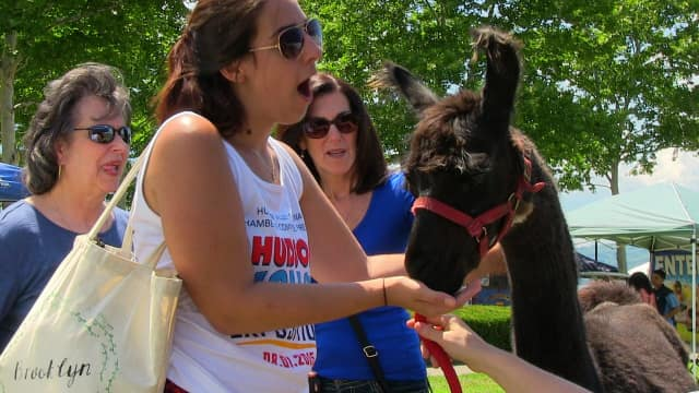 Petting llamas is one of the main attractions of the 2016 Hudson Valley Expo.