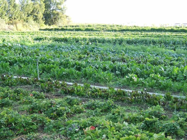 Organic farming is the subject of a book talk by the author Oct. 7 at the Millbrook Library.