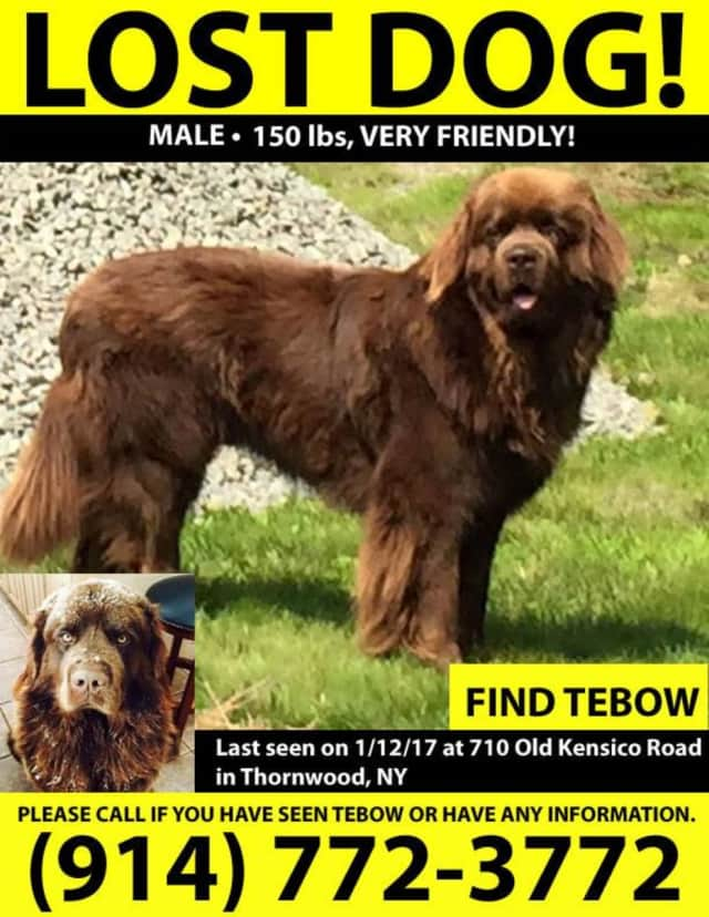 Tebow went missing Thursday from his home in Thornwood. Have you seen him?