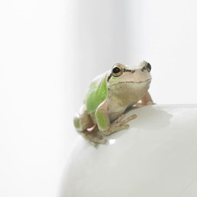 """A frog census is about to begin at the Beardsley Zoo in Bridgeport. """"Citizen Scientists"""" are needed to count frogs in Fairfield County."""