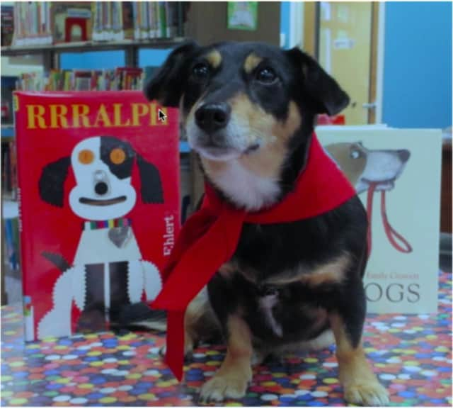 Old Tappan K-3 students are encouraged to read to Gracie, a therapy dog, at the Old Tappan Public Library.