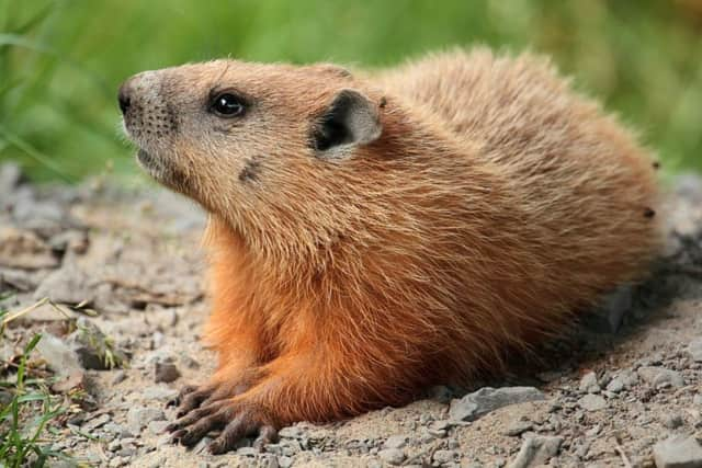 Spring's early or late arrival may or may not hinge on what the groundhog does Feb. 2.