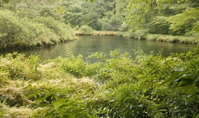 A pristine pond just begs to be fished at the Hudson Highlands Gateway Park in Cortlandt. The town, after 15 years of stewardship over the 352-acre site off Sprout Brook Road, now officially owns it.