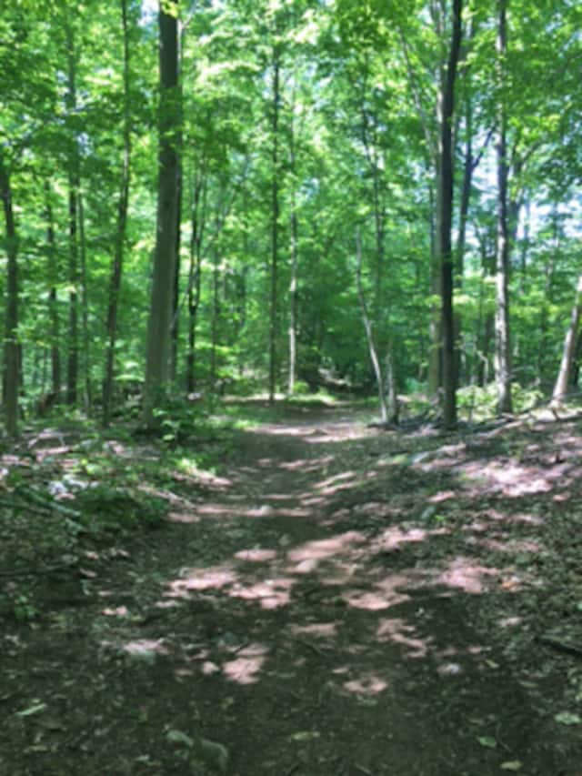 The Lewisboro Land Trust will host a hike of the Ramsey Hunt Sanctuary on June 12.