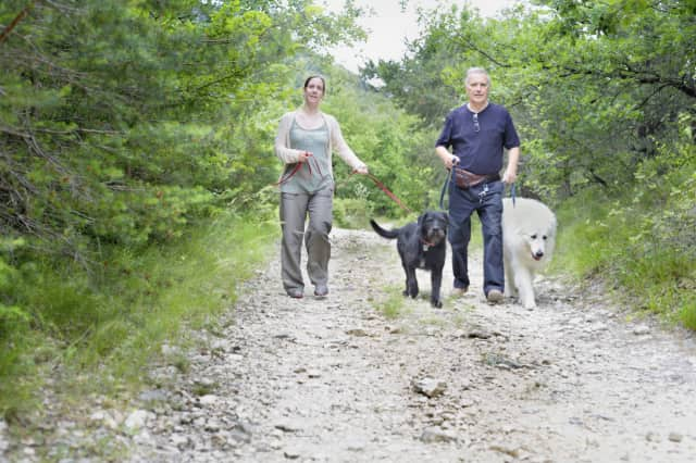 Dog owners can learn about taking their dogs out on trails at an education event in Westport.