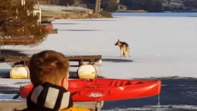 Anuba fell through the ice about 75 yards offshore at Lindy Lake in West Milford.