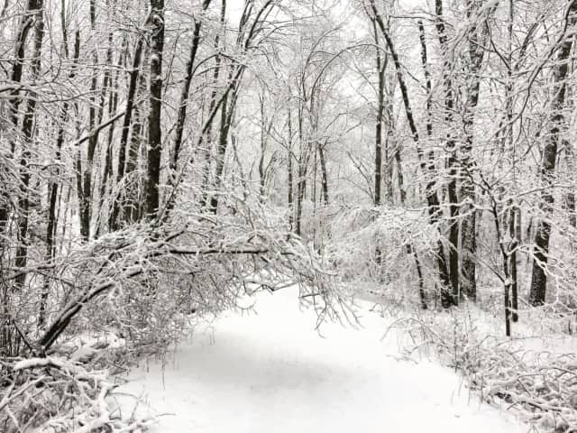 Snow, downed trees, power lines continue to plague Westchester.
