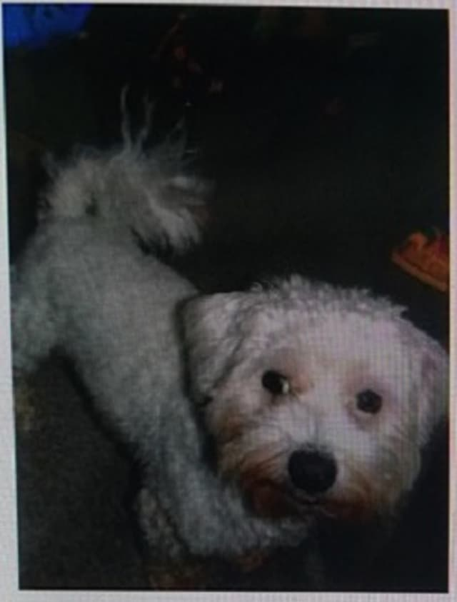 Jack went missing at Chatterton Avenue on June 7.