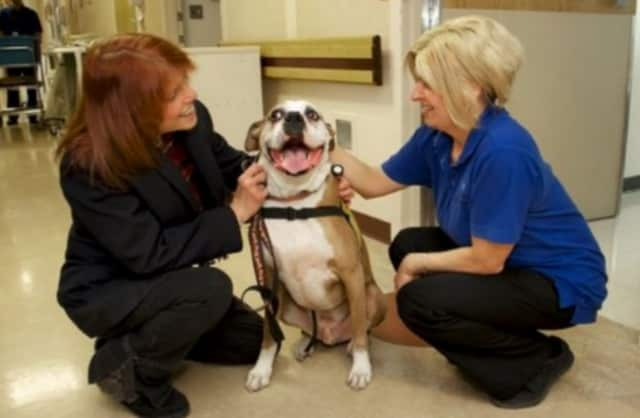 Rachel Katic with her boxer, Rocky, and one of the nurses during a visit to a local hospital.