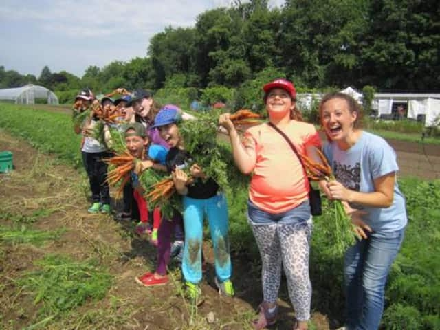 Local schoolchildren get their hands dirty as they learn to harvest vegetables as part of the Poughkeepsie Farm Project. The project gathered up 183,000 pounds of produce this year.